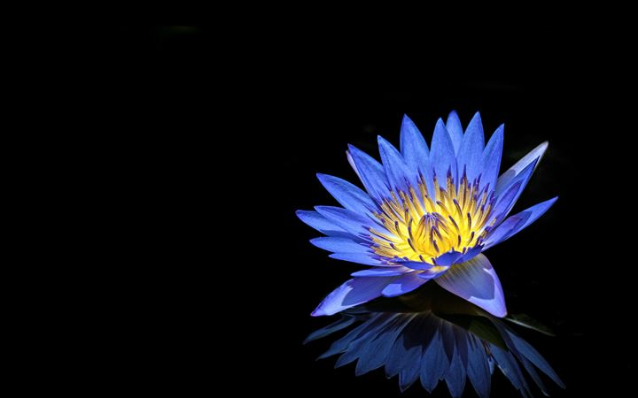 Blue Water Lily All Mac wallpaper