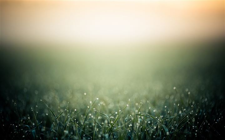 Blurred minimalistic grass All Mac wallpaper