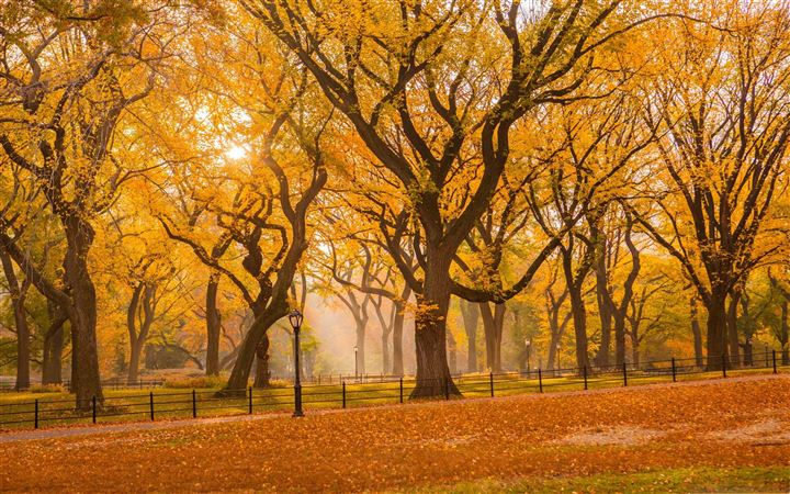 Central Park Fall Foliage All Mac wallpaper