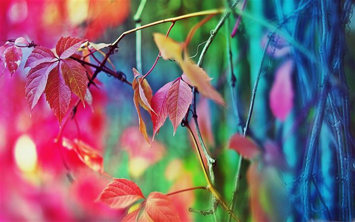 Colorful Leaves All Mac wallpaper