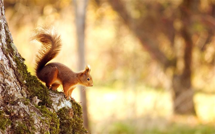 Cute Squirrel MacBook Air wallpaper