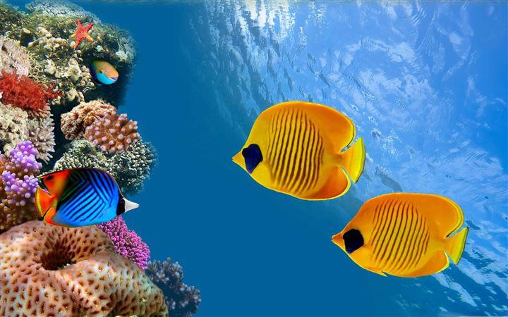 1000 Best Underwater Mac Wallpapers Free Hd Download Allmacwallpaper