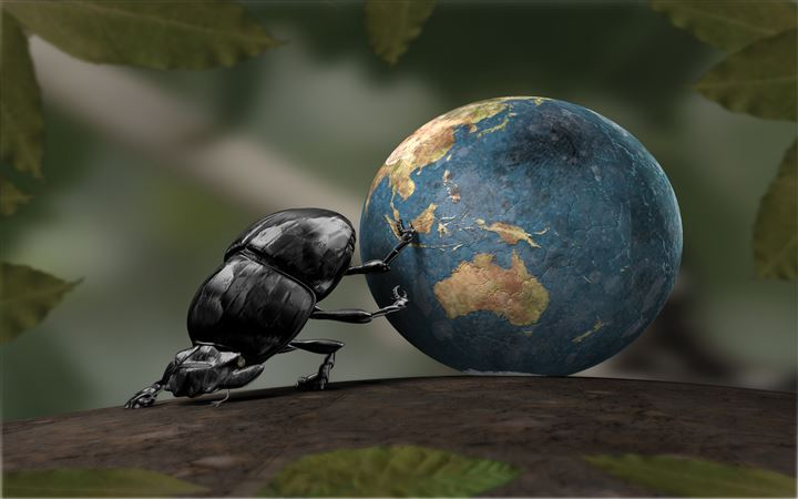 Dung beetle All Mac wallpaper