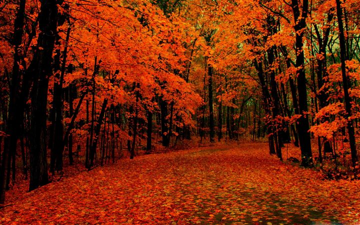 Fall Path All Mac wallpaper