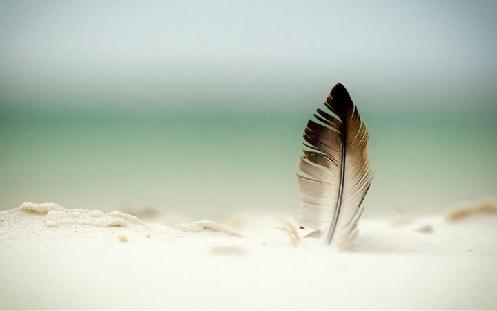Feather In The Sand All Mac wallpaper