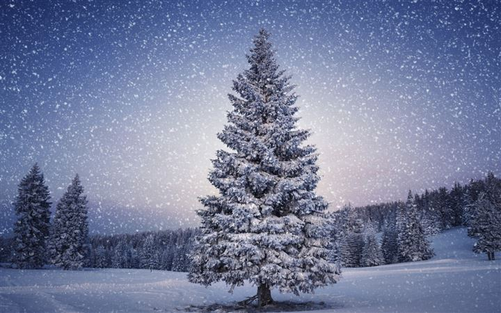 Fir Trees Snowfall Winter All Mac wallpaper