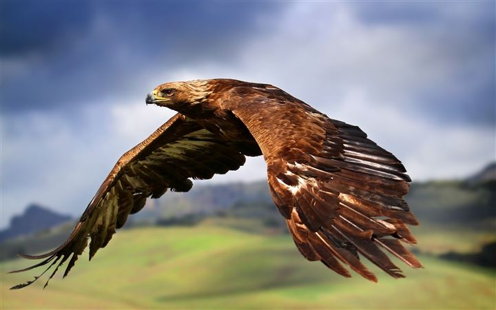 Flying eagle All Mac wallpaper