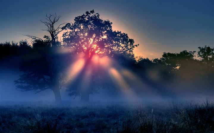 Foggy Sunrise Nature All Mac wallpaper