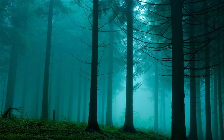 Forest In The Mist Nature All Mac wallpaper