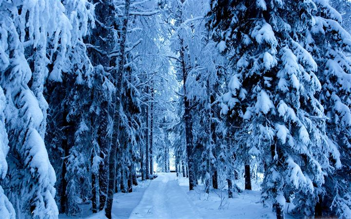 Forest Trails In The Snow All Mac wallpaper