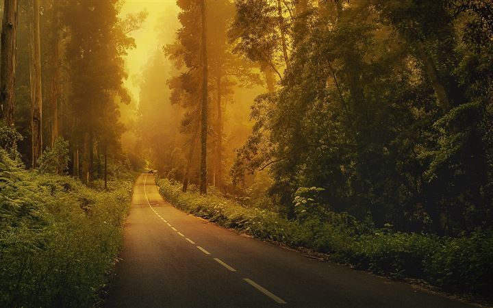 Forest roads All Mac wallpaper