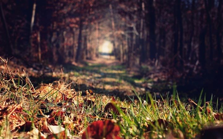 Forests paths trees All Mac wallpaper