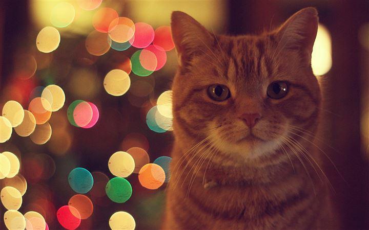 1000 Best Cat Mac Wallpapers Free Hd Download Allmacwallpaper