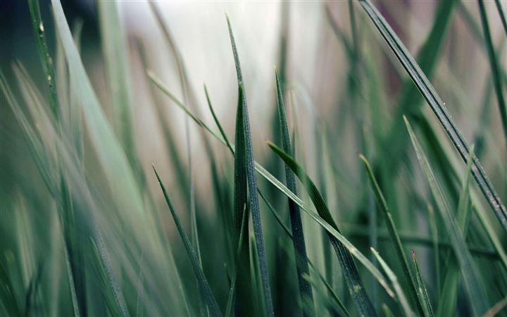Green grass All Mac wallpaper