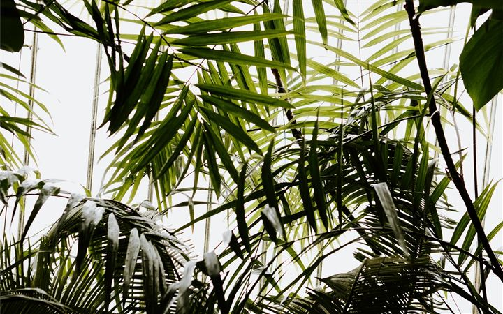 Greenery and tropical fol... All Mac wallpaper