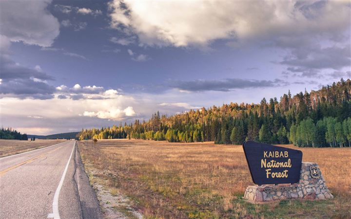 Kaibab National Forest Arizona All Mac wallpaper