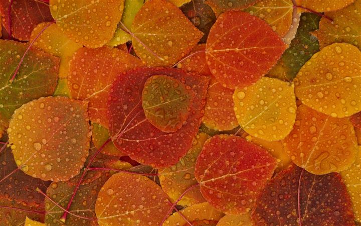 Leaves Of Autumn All Mac wallpaper