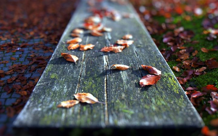 Leaves On The Bench All Mac wallpaper