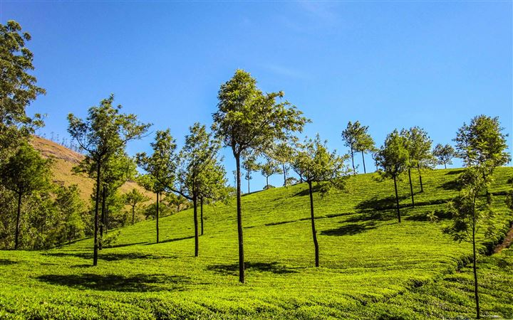 Munnar Hill All Mac wallpaper