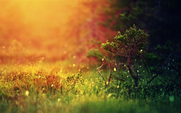 Mystical sunshine nature All Mac wallpaper