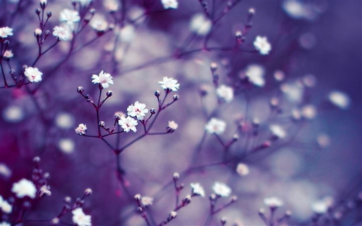 Nature Flowers Macro All Mac wallpaper
