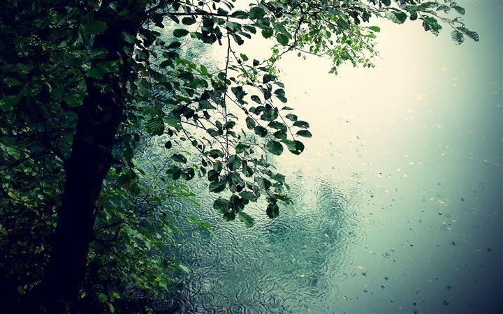 Nature Rain All Mac wallpaper