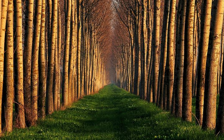 Path Lined With Trees All Mac wallpaper