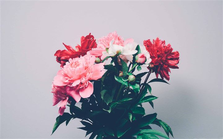 Peonies Bouquet All Mac wallpaper