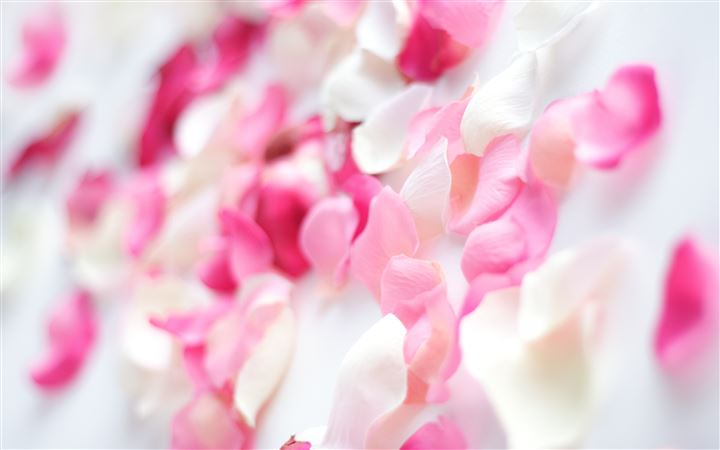 Pink Orchid Flowers All Mac wallpaper