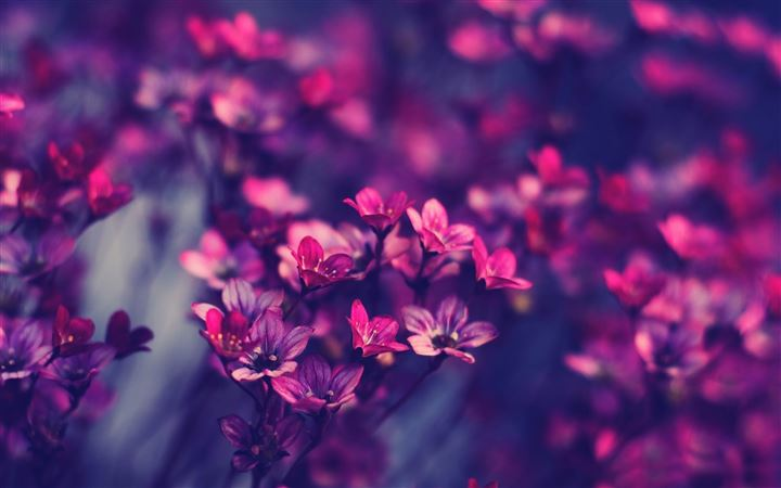 Purple wildflowers All Mac wallpaper