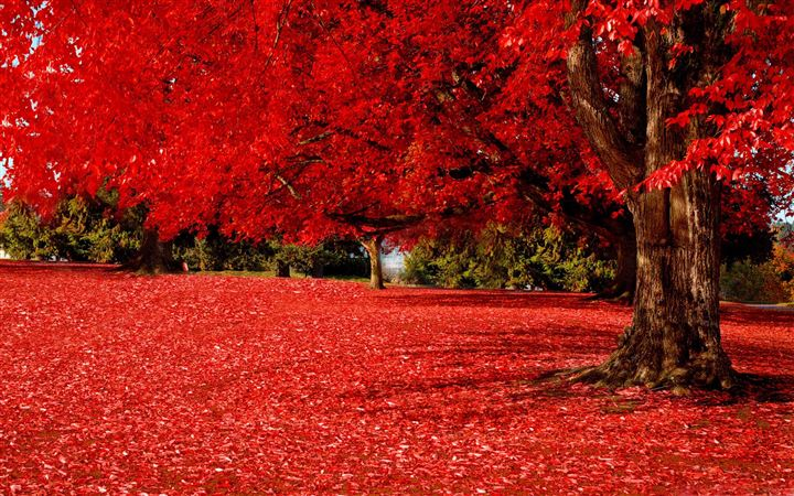 Red Autumn All Mac wallpaper