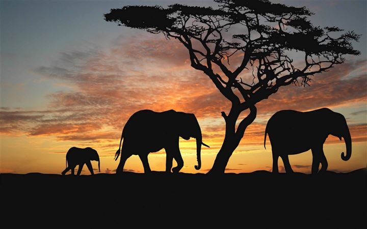 Savannah Elephants MacBook Air wallpaper