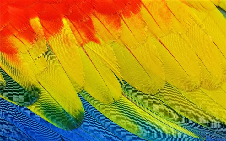 Scarlet Macaw plumage All Mac wallpaper