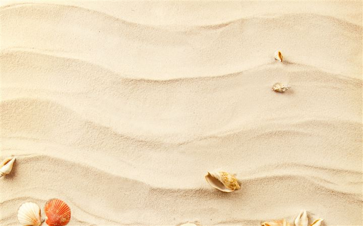 Shells on the sand All Mac wallpaper