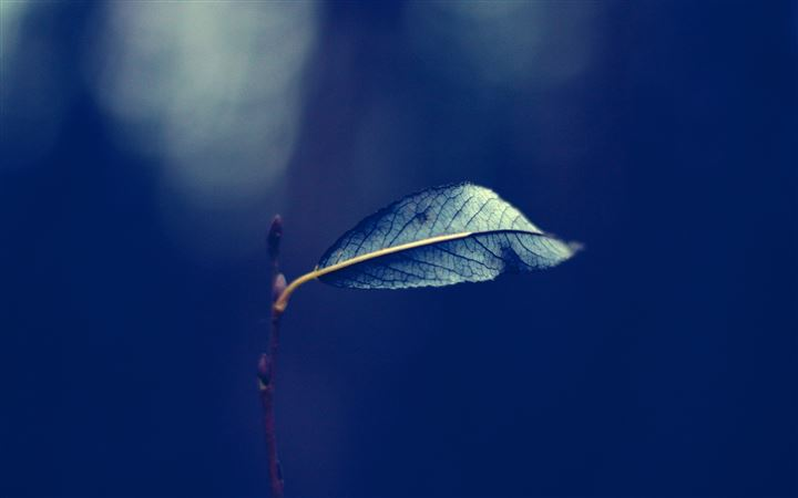 Single Leaf On A Branch All Mac wallpaper