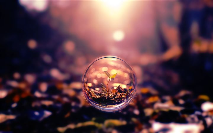 Small Plant In A Bubble Digital Art All Mac wallpaper