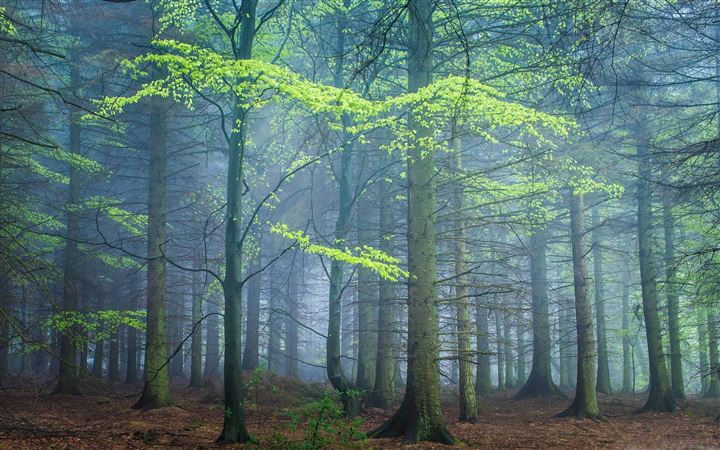 Spring Forest In Fog All Mac wallpaper