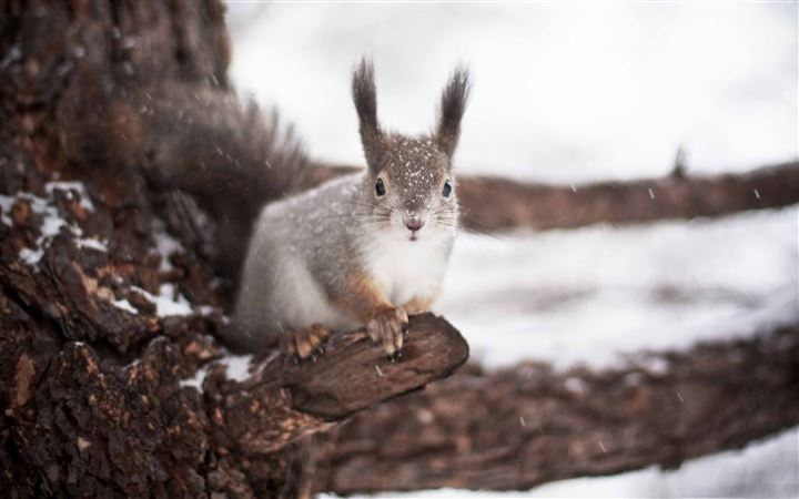 Squirrel Winter All Mac wallpaper