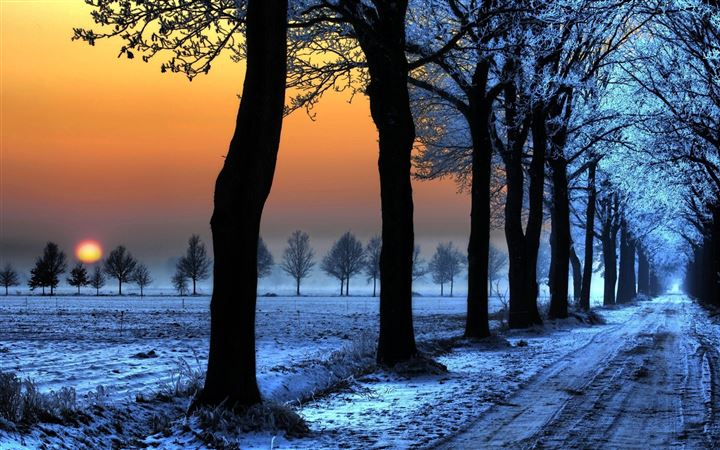 Sunrise Trees Path All Mac wallpaper