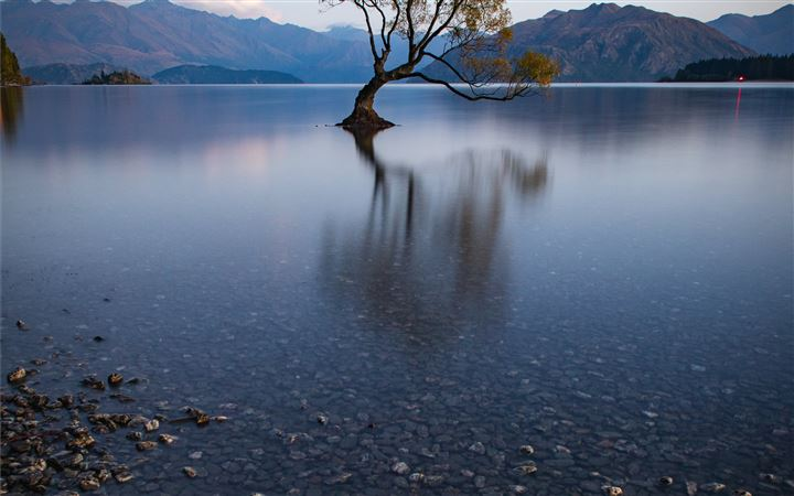 That Wanaka Tree reflecte... All Mac wallpaper