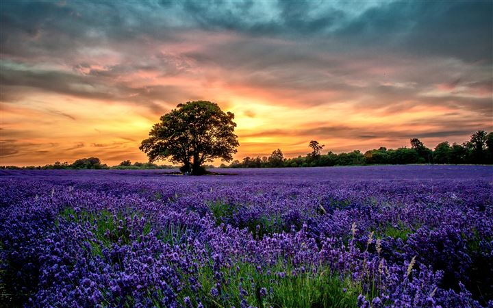 The Love Of Lavender MacBook Air wallpaper