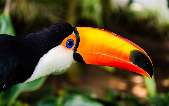 The Toucan All Mac wallpaper