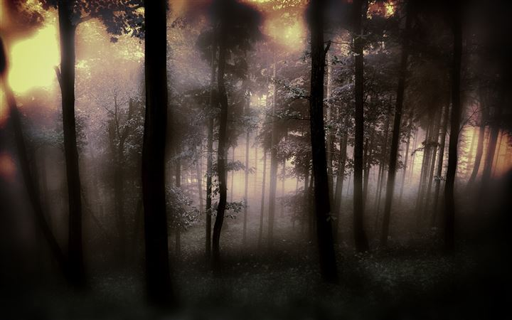 The fog of the forest All Mac wallpaper