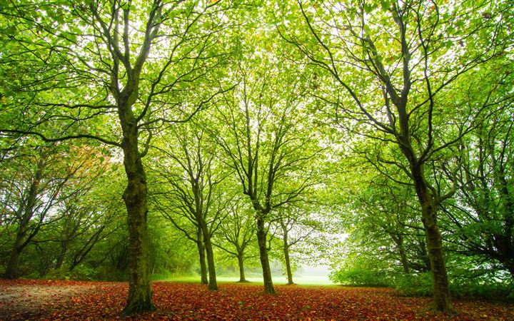 The woods in rows All Mac wallpaper