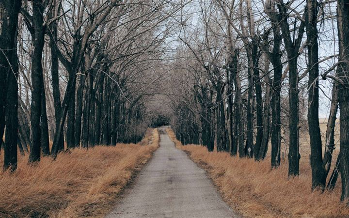 Trees Along A Country Road All Mac wallpaper
