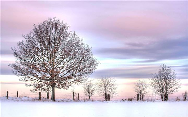 Trees And Fence Winter All Mac wallpaper