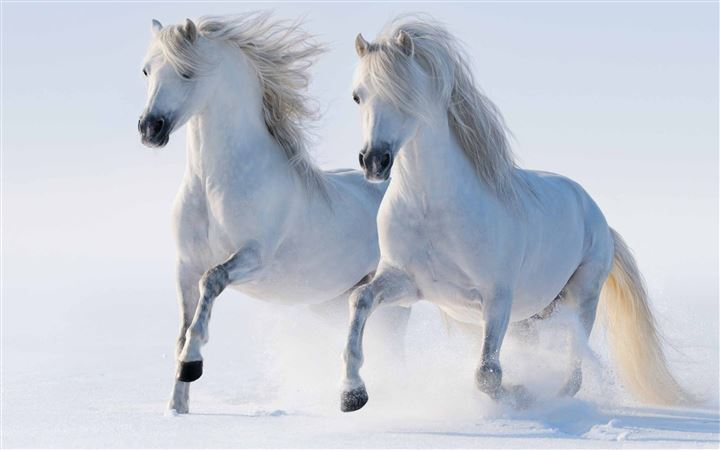 White Horses All Mac wallpaper