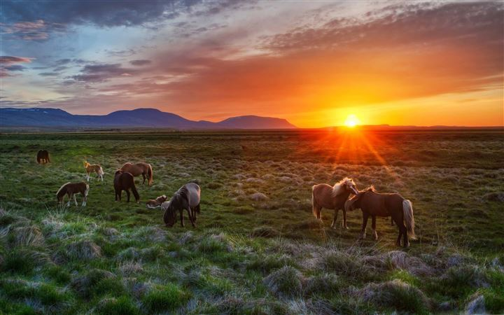 Wild Horses At Sunset All Mac wallpaper