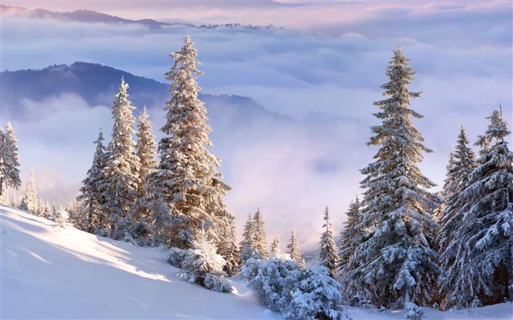 Winter Forest On Slope All Mac wallpaper