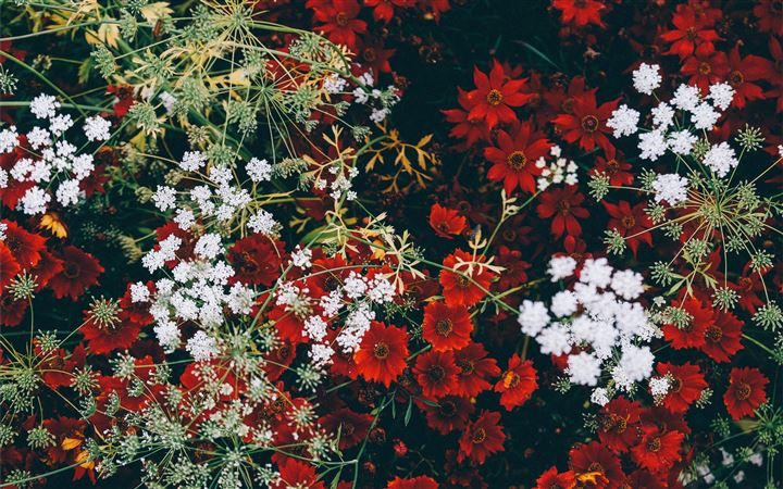 close up photo of garden MacBook Air wallpaper